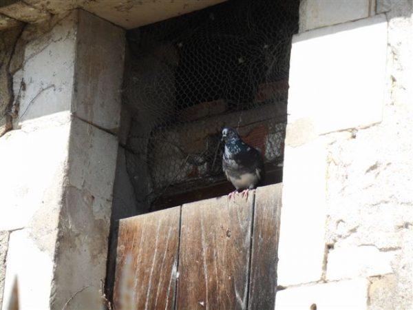 DCPF 89 CA 022 Pigeonnier 9 rue de l'Abreuvoir Vallan 005